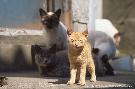 yamanao999_cats_072