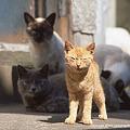 Photos: yamanao999_cats_072