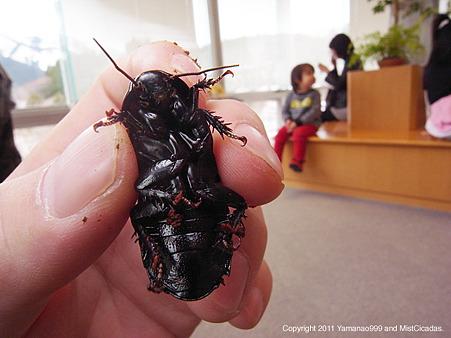 オオゴキブリ