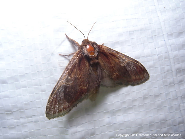 写真: yamanao999_insect2011_466