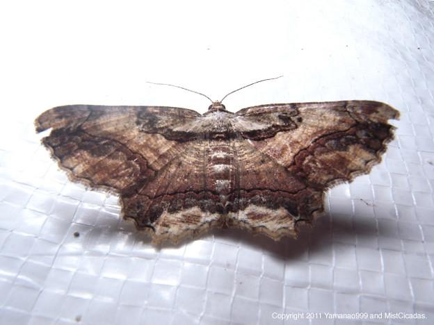 写真: yamanao999_insect2011_482