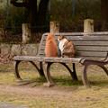 公園デート中のカップル