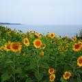 海と向日葵