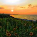 鳴り石の浜の夕景
