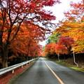 パークウェイ紅葉