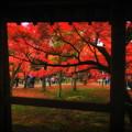 Photos: 東福寺 紅葉4