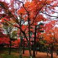 Photos: 東福寺 紅葉2