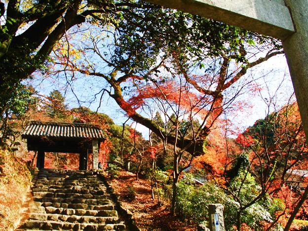 秋月黒門の紅葉