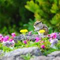 写真: ☆ 花園の人気者