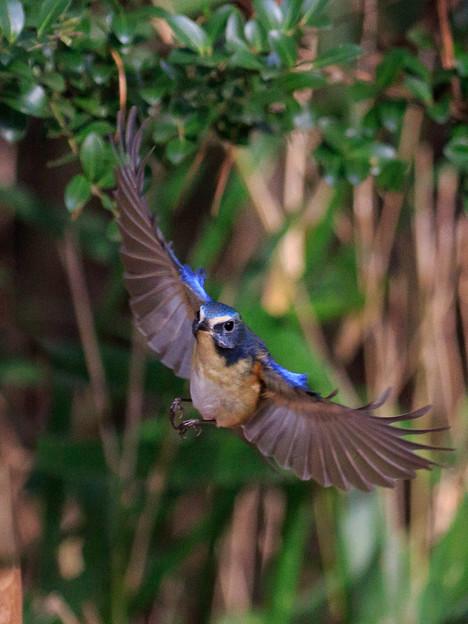 小鳥に魅了され 6
