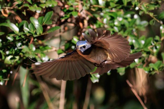 小鳥に魅了され 5