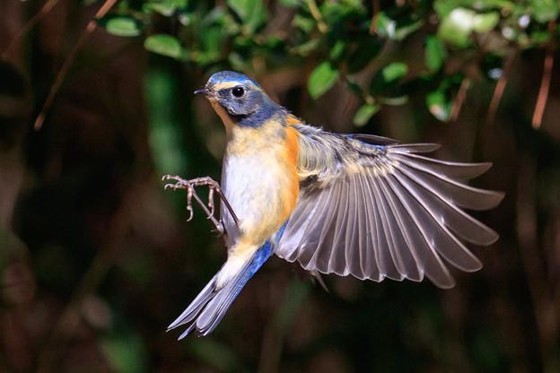 小鳥に魅了され 4