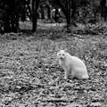 写真: 哀愁猫