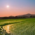 写真: 田んぼのある風景