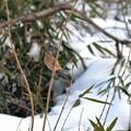 雪が降ると小鳥が見易く・・・~