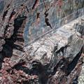 Photos: 巨大な針葉樹の化石の断面
