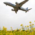 飛行機と菜の花 2