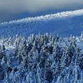 写真: 樹氷の季