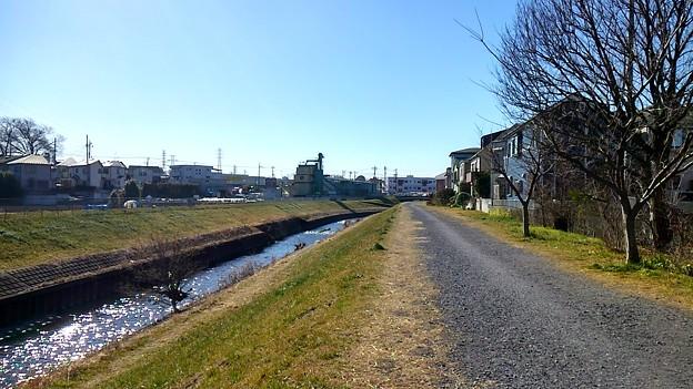 20170207黒目川(新座市)