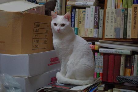 2016年5月30日のシロちゃん(雌3歳)