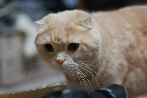 写真: 2016年10月1日のスコちゃん(オス3歳)
