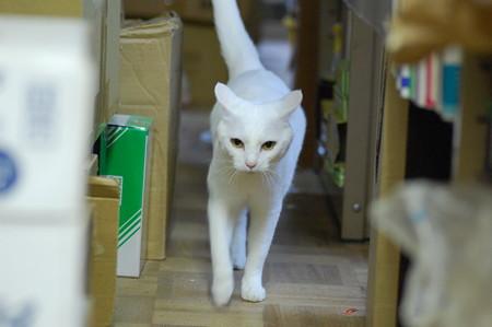 2016年10月1日のシロちゃん(メス3歳)