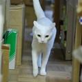 写真: 2016年10月1日のシロちゃん(メス3歳)