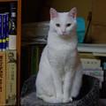 写真: 2017年1月24日のシロちゃん(メス3歳)