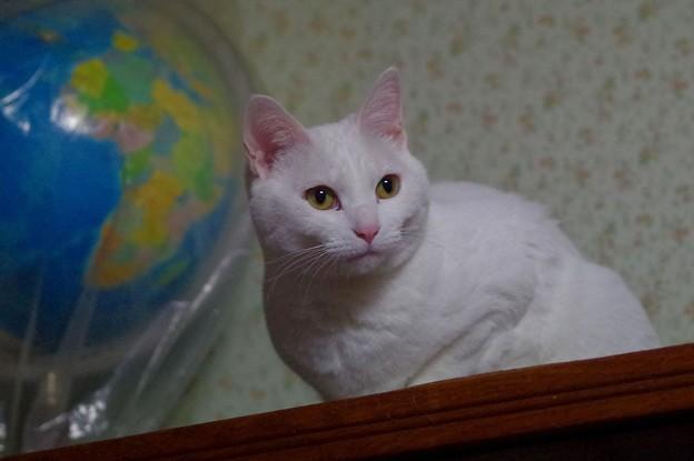 写真: 2017年3月4日のシロちゃん(メス3歳)