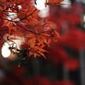 写真: 赤の紅