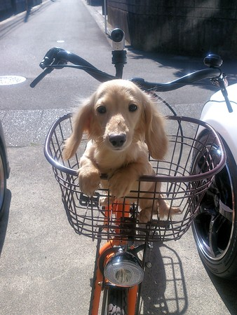 ピカりんと自転車?