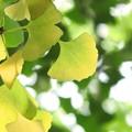 写真: 緑から黄色へ