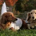 写真: 秋を探しに来たワン!
