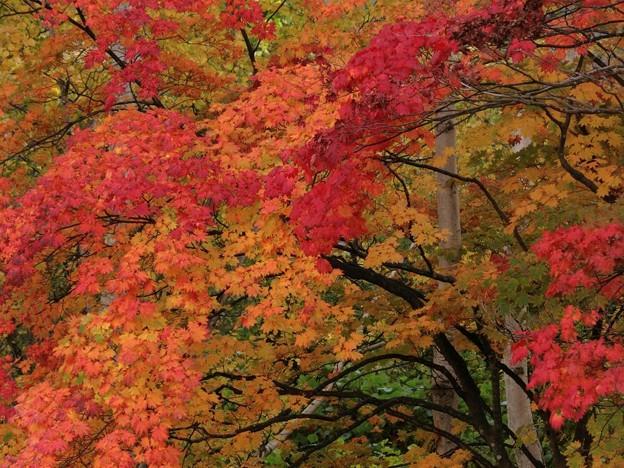 写真: 秋は錦絵の如く