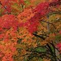 秋は錦絵の如く