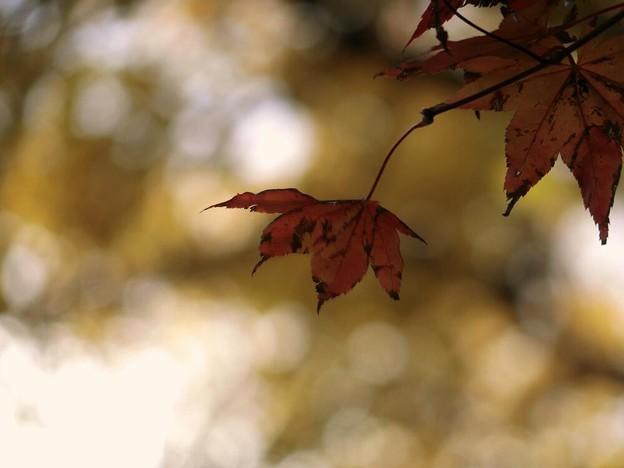 写真: 晩秋のハーモニー