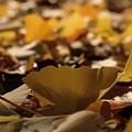 Photos: さらば黄色の絨毯