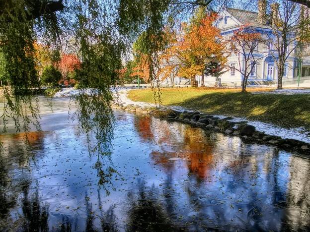 写真: 初冬.薄氷が張る頃