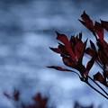 写真: 気温0℃・赤と青