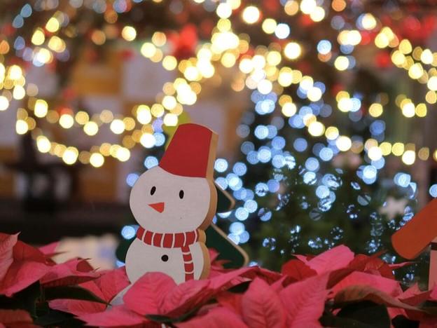 ポインセチアとクリスマスイルミ