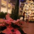 写真: 一人きりのクリスマスイブ