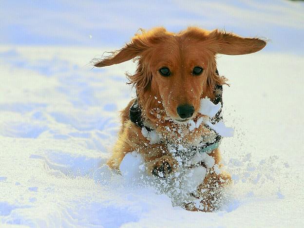 Photos: 雪原の躍動