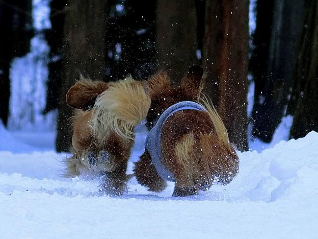 写真: 森へ猛ダッシュ!!!
