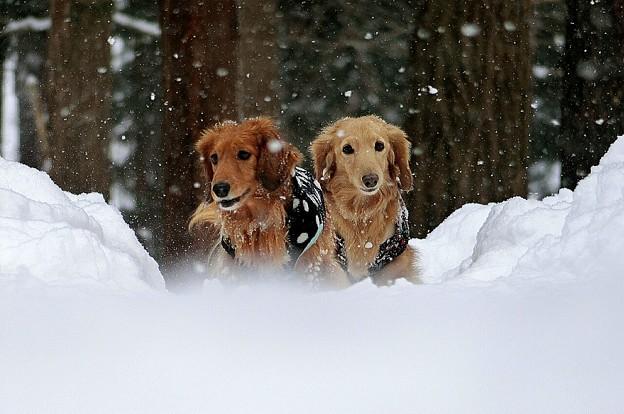 写真: 雪の中のふたり~ふわふわと~♪♪
