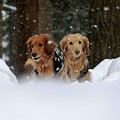 雪の中のふたり~ふわふわと~♪♪
