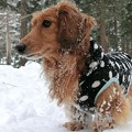 Photos: 雪まみれのRan~♪