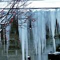 写真: 赤い実と大同倉庫の氷柱