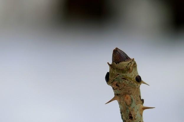 Photos: 何じゃこれ~トゲトゲの春~♪♪