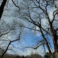 写真: 春を待つ巨木と坂下グランドの3月
