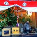 写真: 狸小路のタヌコ神社~タヌコdayに向けて♪